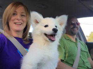 cute-fluffy-dog-smiles-in-car