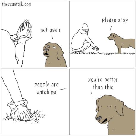 Pet Care Tips: Dealing with Doo Doo